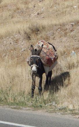 2016-10-08-filbo-iran-region-hashtrud-32-rddscn2568