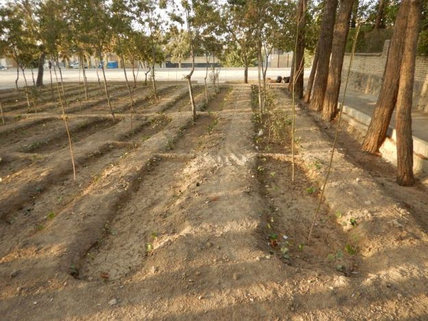 2016-11-01, Filbo Iran,Isfahan Bewässerung,DSCN2835