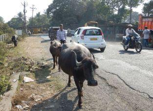 2017-01-07, Filbo Indien,Reg. Chondi,DSCN3628