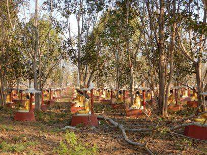 2017-03-14, Filbo Myanmar,Reg. Monywa,DSCN4328