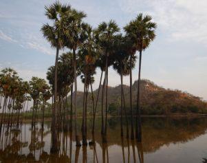 2017-03-17, Filbo Myanmar,DSCN4401
