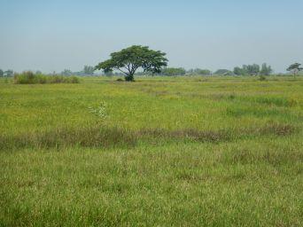2017-03-26, Filbo Myanmar,Yangon,DSCN4517
