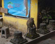 2017-06-12, Filbo Indonesien,Yogyakarta,DSCN5631