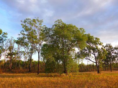 2017-07-06, Australien, Litchfield, Do.P1080126
