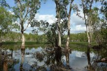 2017-07-09, Australien, Litchfield,Tabletop Swamp, Do.P1080331