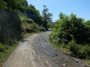 2016-06-16,Filbo,Albanien,Region Kalis,DSCN1345