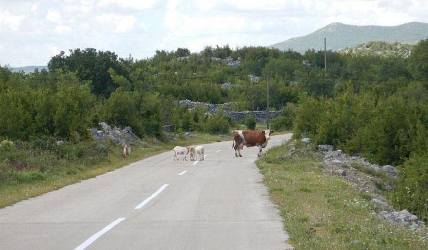 2016-05-30,Filbo,Kroatien 5,Region Dalmatinska,DSCN0995