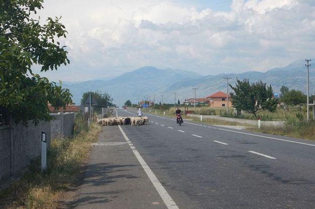 2016-06-09,Filbo,Albanien,Region Koplik,DSCN1199