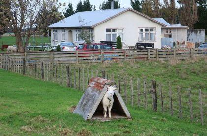 2018-05-21, Filbo Neuseeland,Reg. Greatford,074222_IMG_0764