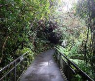 2018-05-23, Filbo Neuseeland,Reg. Turangi,090937_IMG_0769