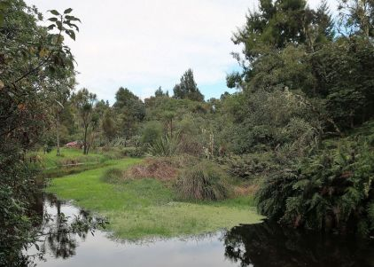 2018-05-23,Filbo Neuseeland,Reg. Turangi,090922_IMG_0767