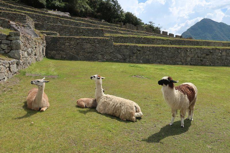 2018-09-21, Filbo Peru, Machu Picchu,IMG_2430(1)