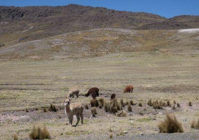 2018-09-30, Filbo Peru, Reg. Rogruzca,095645_IMG_2504