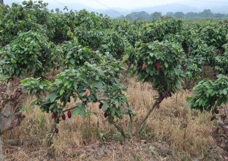 2018-10-23, Filbo Ecuador,Reg. Naranjal,IMG_2670