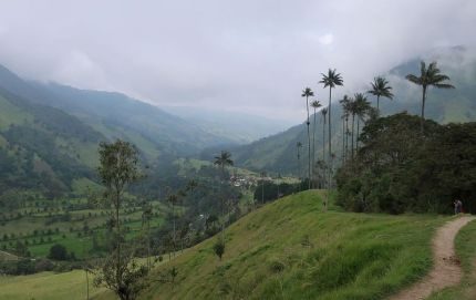 2018-12-21,Filbo Kolumbien,Valle Cocora,11117_IMG_3311