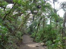 2019-04-15, Guatemala,Acetenango,3800m, Do,P1150451