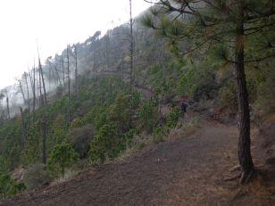 2019-04-15, Guatemala,Acetenango,3800m, Do,P1150469