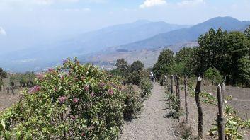 2019-04-16,Guatemala, Acetanago, DoHy110702