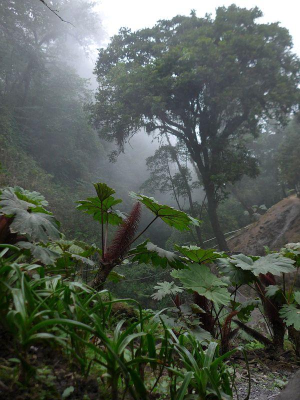 2019-04-23, Guatemala,Fue. Georginas,Do.P1150939
