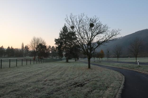 2019-12-02,Filbo Luxemb. Hinkel, IMG_5961